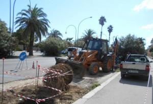 Lavori palme San Benedetto del Tronto
