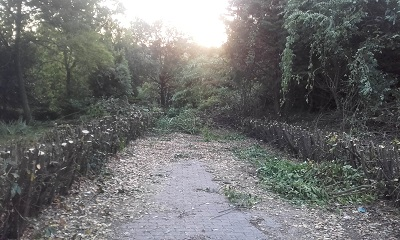 Ancona parco ex provincia potature