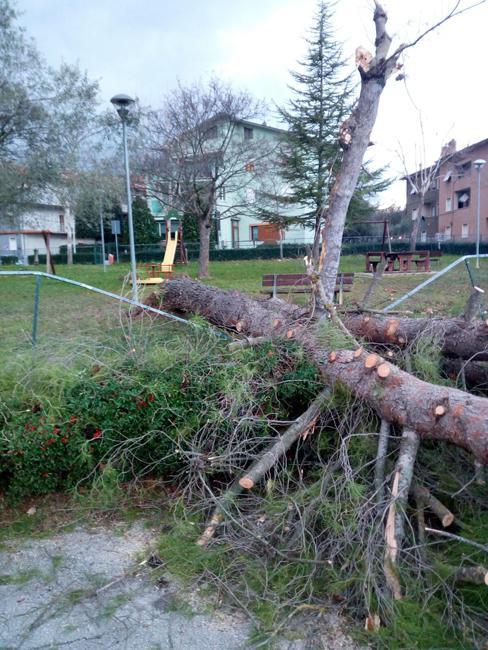 San Severino: cade un pino per il vento forte, danni alle auto in sosta
