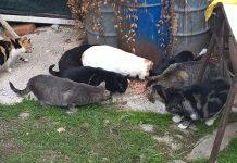 mangime donato gatti