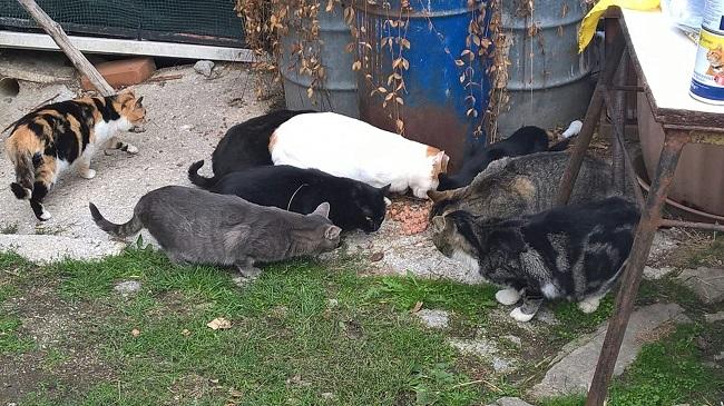 Fermo, sostegno agli animali: donati 2500 kg di mangime