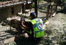 Arquata del Tronto ultima tappa tour aiuti agli animali