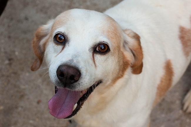 Casa per cani anziani al via lavori Camerino
