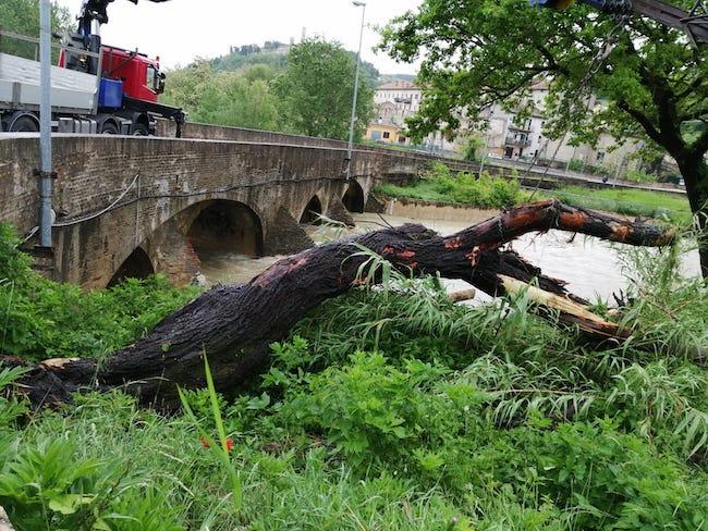 tronchi fiume potenza