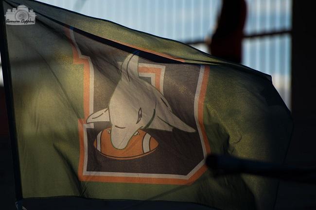 bandieradolphins